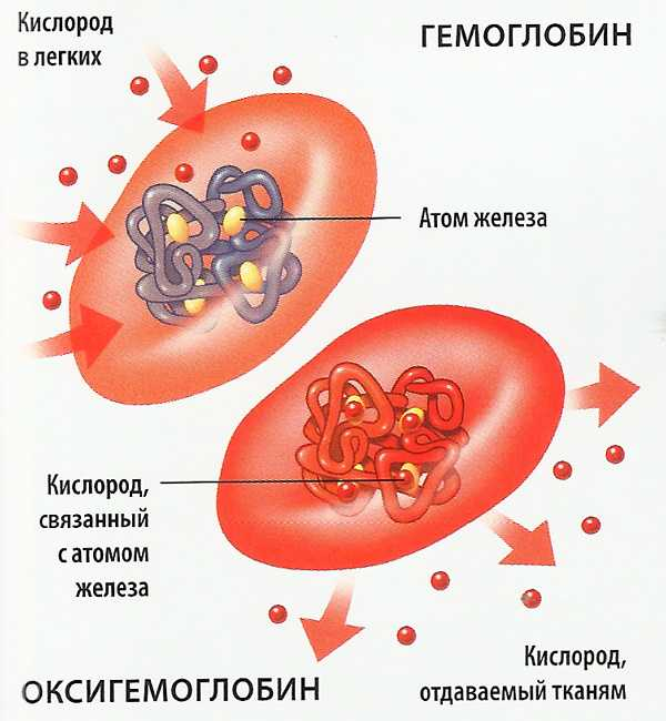 Зачем человеку нужна кровь. Зачем нужна кровь человеку и из каких компонентов она состоит